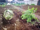 さびしい区民農園09.01.24.jpg
