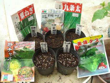 種蒔き 2020.07.28