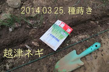 越津ネギ種蒔き2014.03.25.jpg