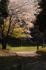 春の花20