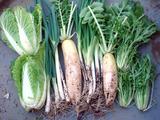 収穫 201012.12.19