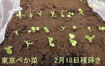 東京べk菜2020.03.15