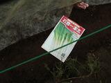 石倉1本ネギ種蒔き2012.09.27