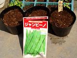 ジャンビーの種まき09.04.13.jpg