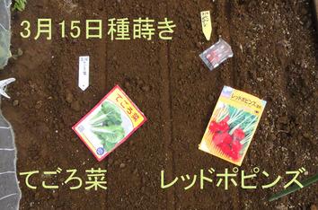種蒔き 2020.03.15