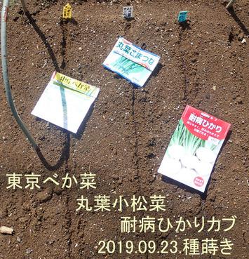 種蒔き2019.09.23