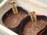 茄子種蒔き2011.02.24