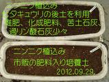 ニンニク植込み2012.09.29