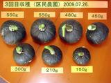 3回目カボチャ収穫2009.07.26.jpg