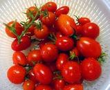 ミニトマト収穫ルーフバルコニー菜園.jpg