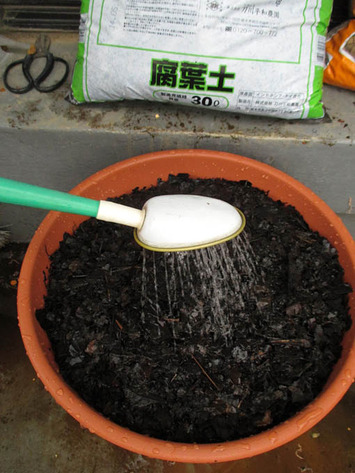 5腐葉土に水.jpg