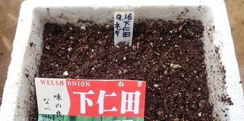 下仁田ネギ2019.09.16