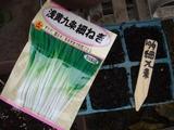 浅黄九条細ネギ2010.10.09