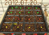 種蒔き2012.07.20