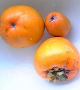 柿収穫3個