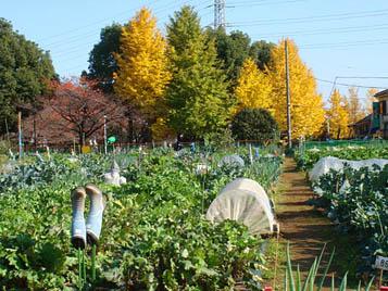区民農園09.11.28.jpg