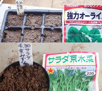 平成最後種蒔き2019.04.30