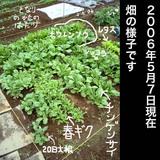 畑の様子2006.05.07.