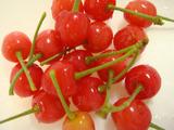 サクランボ収穫2012.05.09