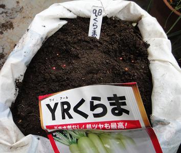 YRくらま種蒔き2017.09.08