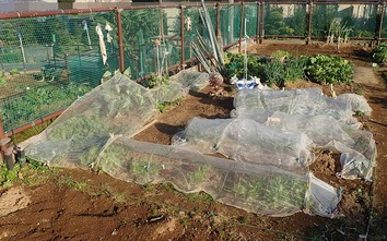 区民農園 202001.11