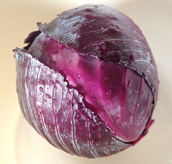 紫キャベツ2019.06.25