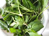 ホウレンソウ収穫2011.01.23