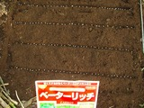 ベーターリッチ種蒔き2012.07.25