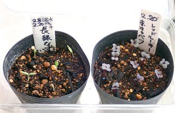 赤キャベツ中長茄子2021.02.25