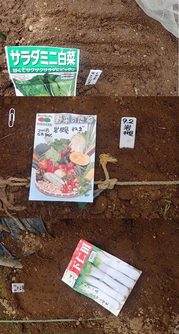 種蒔き 2019.09.03
