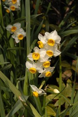 春の花14