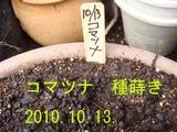 コマツナ種蒔き2010.10.13