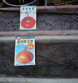 赤玉ネギ、泉州黄玉葱