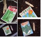 2010.11.02.種蒔き