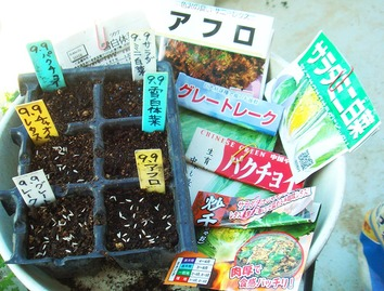 種蒔き2020.09.09