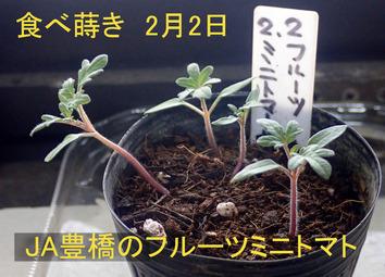 フルーツミニトマト2020.03.07
