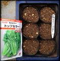セロリ種蒔き2013.06.26.