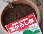 からし菜種蒔き2010.11.24.