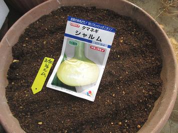 シャルム種蒔き201503.30