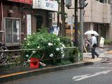 つゆ入り2010.06.14.jpg