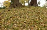 枯葉と樹2本