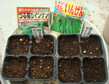 インゲン種蒔き2020.07.28