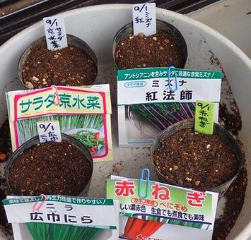 種蒔き2018.09.01