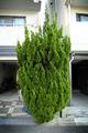 樹2010.07.21.jpg