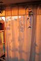 緑のカーテン1-2013.12.23