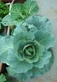 新藍と四季蒔き2011.10.24