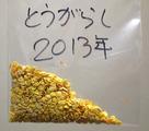 唐辛子自家採種2013.12.25