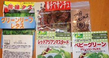 レタス種蒔き2020.02.12