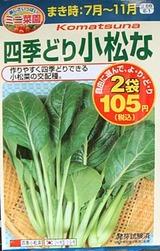 小松菜種08.11.23.jpg