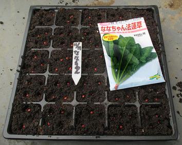 ななちゃんホウレンソウ種蒔き2014.11.11.jpg